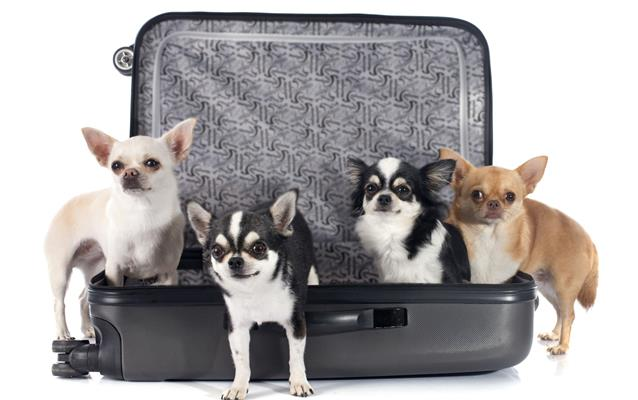 Animais no avião
