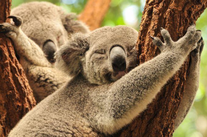 Najtańsze bilety do Australii. Jak kupić lot w dobrej cenie?