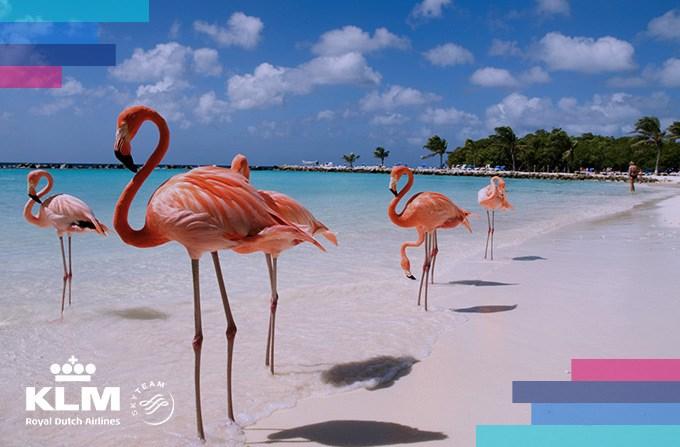 Bezpieczna podróż na Karaiby z KLM Royal Dutch Airlines