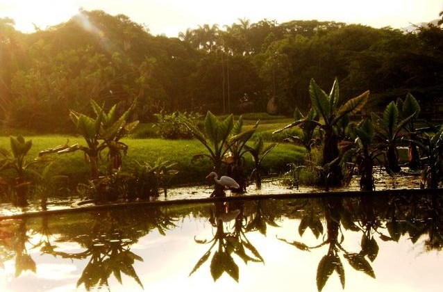 Conociendo la Sabana venezolana