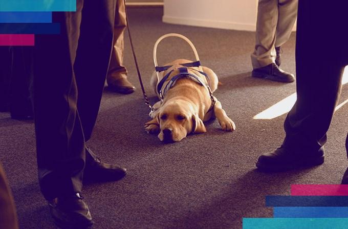 Czy mogę zabrać do samolotu psa przewodnika?