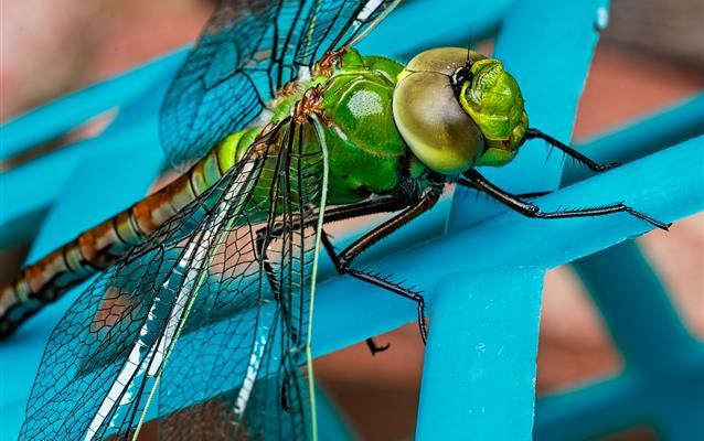 Muşcături de insecte, arahnide şi reptile