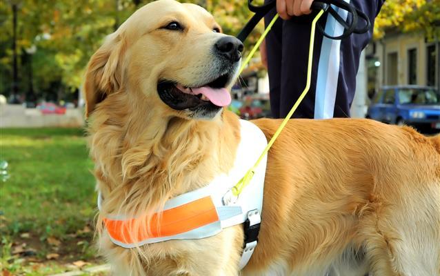 Môžem cestovať s vodiacim psom?