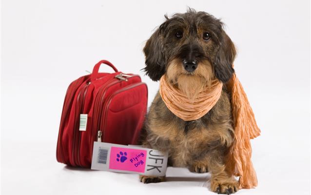 Como preparar seu animal para viajar de avião?