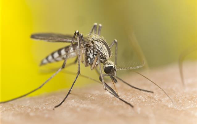 Lo que debes saber sobre la malaria, el dengue y zika