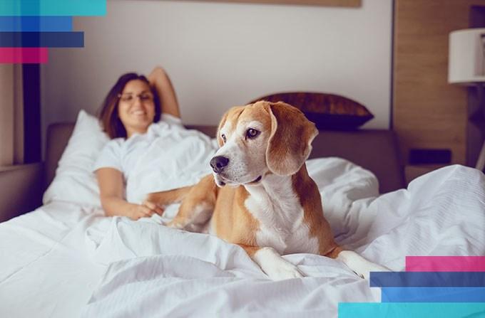 Goście ze zwierzętami w hotelu