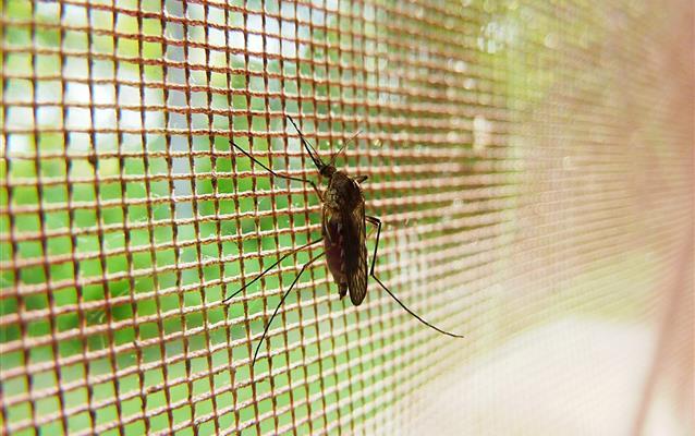 Ce trebuie să ştiţi despre malarie şi febra denge