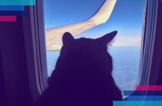 Pies, kot w samolocie i inne zwierzęta